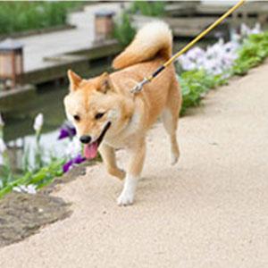 犬用リード・首輪の選び方