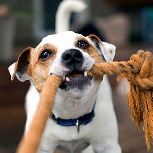 犬がおもちゃで遊ぶ理由