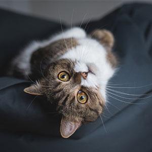 犬猫などペット用クッションやマットやベッドの選び方
