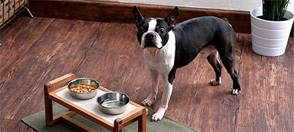 犬の食事特集