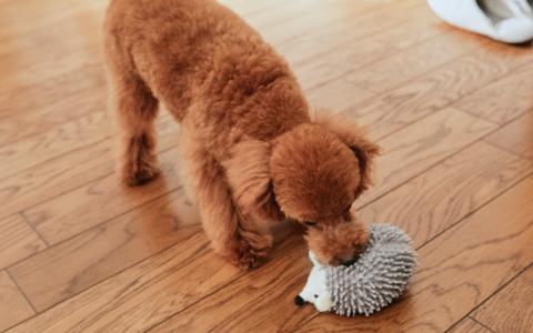 犬の健康チェック Petio ペティオ