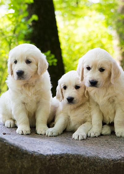 犬を飼うまでに | 犬の飼い方・しつけ方 | Petio[ペティオ]