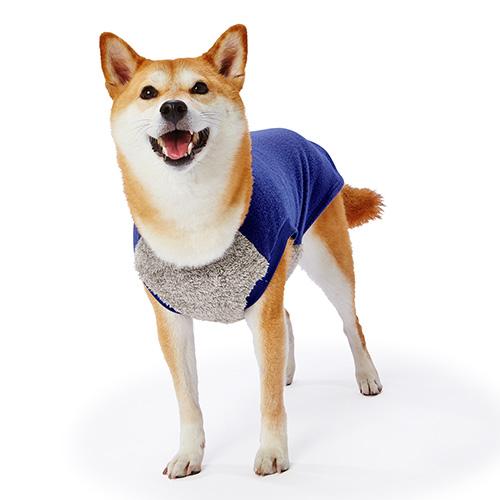 blue_M_dog